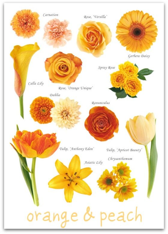A glossary of flowers the peak xperience yellow flowers orange flowers red flowers mightylinksfo