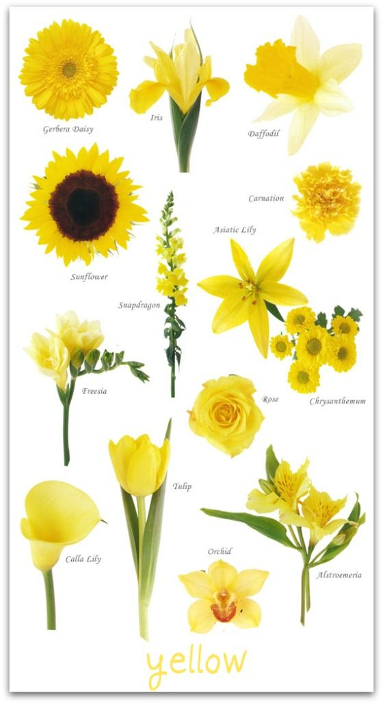Types Of Yellow Flowers For Weddings Thin Blog